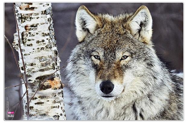 Veloflex Posterunterlage Wolf 60 x 40 cm Schreibunterlage