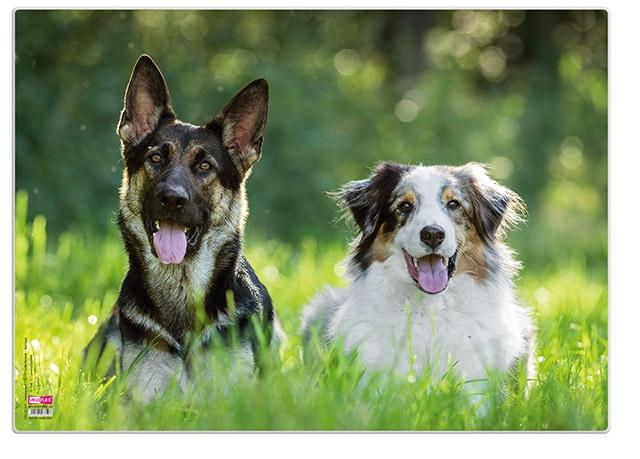 Veloflex Posterunterlage 50 x 35 cm Hunde Schreibunterlage