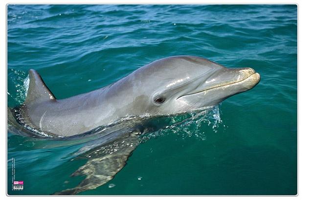 Veloflex Posterunterlage Delfin 60 x 40 cm Schreibunterlage