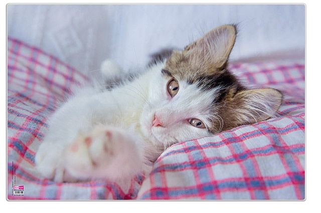 Veloflex Posterunterlage 60 x 40 cm  Katze Schreibunterlage