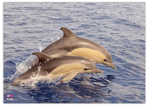 Veloflex Posterunterlage Delfin 35 x 50 cm Schreibunterlage