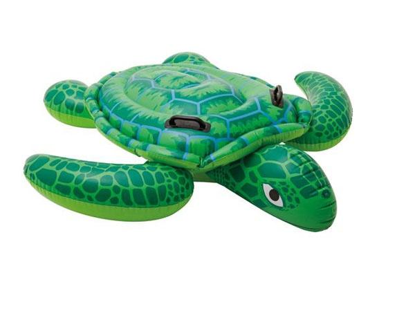 Schwimmtier Schildkröte