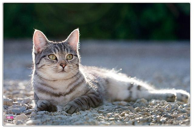 Posterunterlage Katze Schreibunterlage