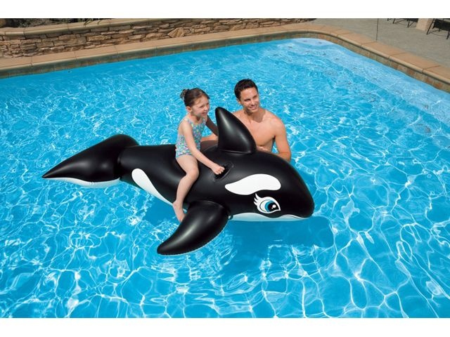 Schwimmtier Wal