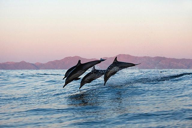 Posterunterlage Delfine Schreibunterlage