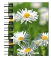 Hardcover-Spiralbuch A7 Gänseblumen