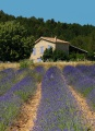 Briefpapier Briefmappe Lavendel